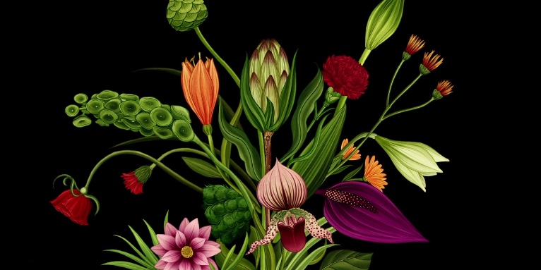 Life cycle of flowers